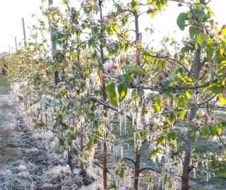 L'agricoltura fa i conti con il gelo di primavera e gli eventi meteo estremi